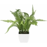 EUROPALMS Boston fern in pot, 28 cm