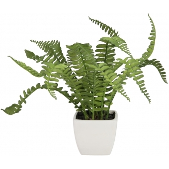 EUROPALMS Boston fern in pot, 25cm