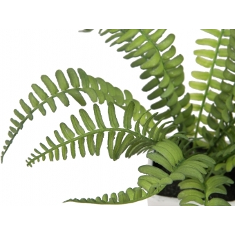 EUROPALMS Boston fern in pot, 25cm #2