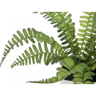 EUROPALMS Boston fern in pot, 25cm #2