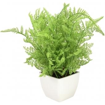 EUROPALMS Forest fern in pot, 28 cm