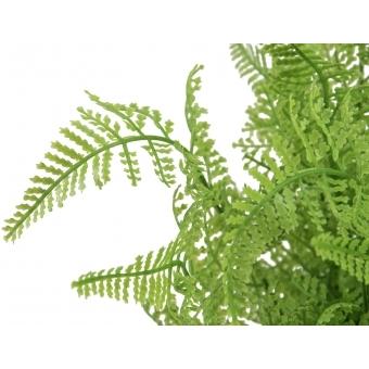 EUROPALMS Forest fern in pot, 28 cm #2