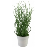 EUROPALMS Corkscrew grass in white pot, PE, 38cm