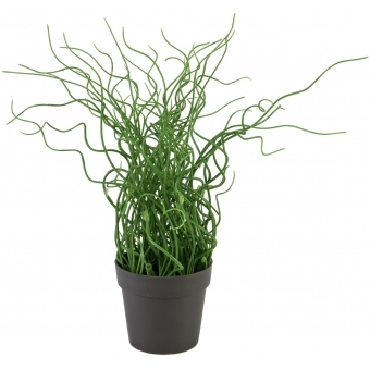 EUROPALMS Corkscrew grass in brown pot, PE, 38cm