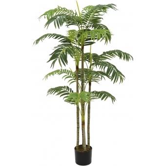 EUROPALMS Areca palm, 180cm