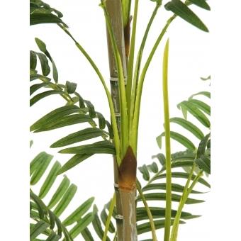 EUROPALMS Areca palm, 180cm #2
