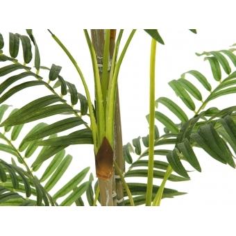 EUROPALMS Areca palm, 180cm #3