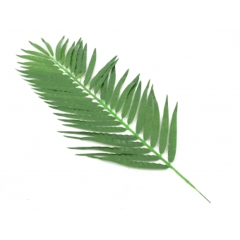 EUROPALMS Coconut palm branch, artificial, 90cm 12x #2