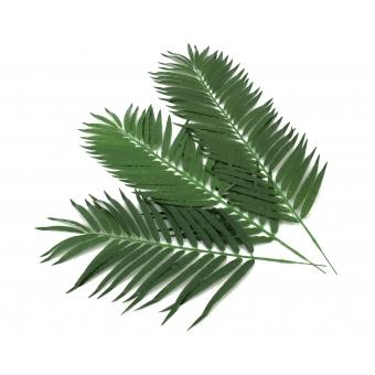 EUROPALMS Coconut palm branch 90cm 12x #3