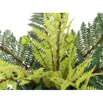 EUROPALMS Forest fern, 50cm #2