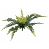 EUROPALMS Forest fern, 50cm