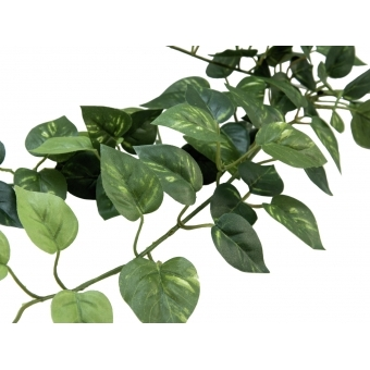 EUROPALMS Pothos Bush Tendril Classic, 70cm #3