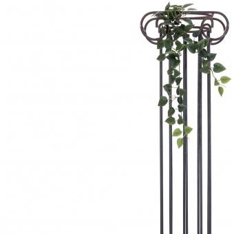 EUROPALMS Philodendron Bush Classic, 70cm #2