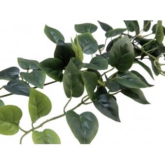 EUROPALMS Philodendron Bush Classic, 70cm #3