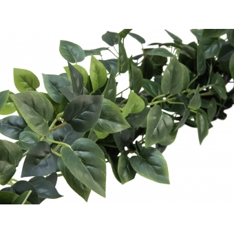 EUROPALMS Philodendron Bush Classic, 100cm #3