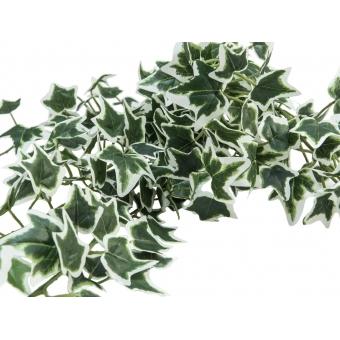 EUROPALMS Holland Ivy Bush Tendril Classic, 70cm #3