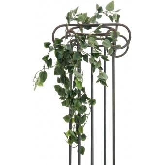 EUROPALMS Philodendron Bush Classic, 60cm