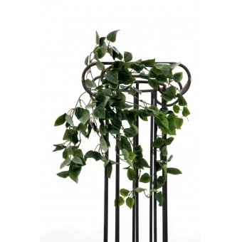 EUROPALMS Philodendron Bush Classic, 60cm #4