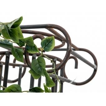 EUROPALMS Philodendron Bush Classic, 60cm #5