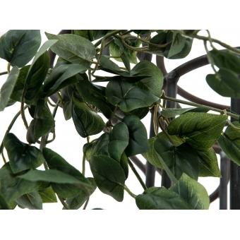EUROPALMS Philodendron Bush Classic, 60cm #6