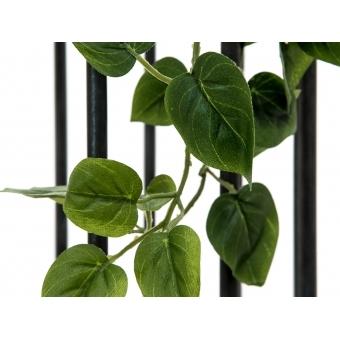 EUROPALMS Philodendron Bush Classic, 60cm #7