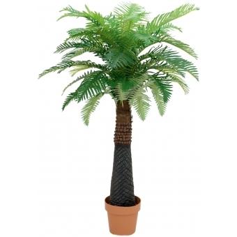 EUROPALMS Canary Date Palm, 150 cm
