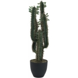 EUROPALMS Mexican cactus with leaves, 75cm