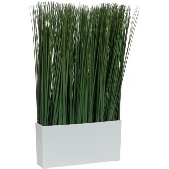 EUROPALMS Marram grass, 50x27cm