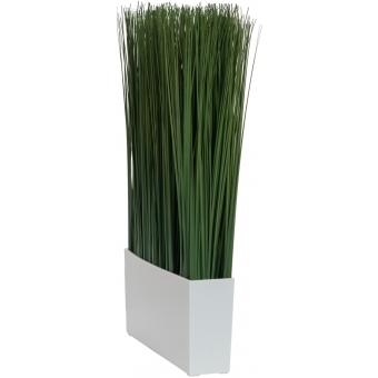EUROPALMS Marram grass, 50x27cm #2