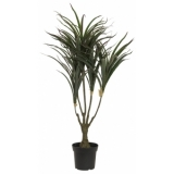 EUROPALMS Dracena, green-red, 90cm