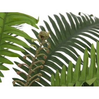 EUROPALMS Sword Fern, artificial plant,70cm #2