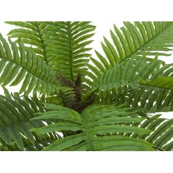 EUROPALMS Cycas Palm Tree, 70cm #3