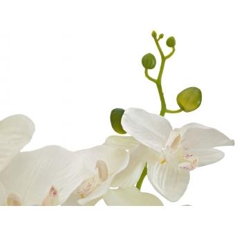 EUROPALMS Orchid, artificial plant, cream, 80cm #3