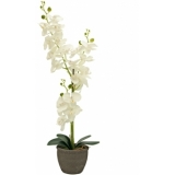 EUROPALMS Orchid, artificial plant, cream, 80cm