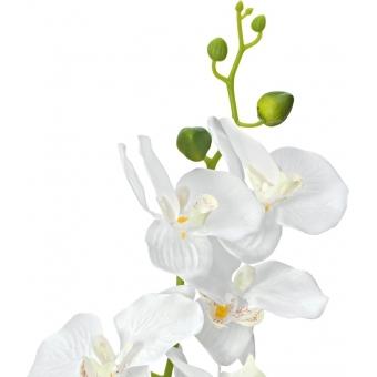 EUROPALMS Orchid, artificial plant, white, 80cm #2