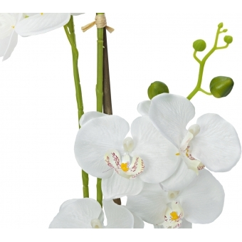 EUROPALMS Orchid, white, 65cm #3