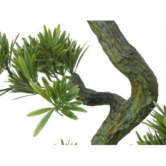 EUROPALMS Pine Bonsai, 70cm #3