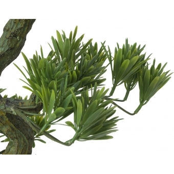 EUROPALMS Pine Bonsai, 70cm #4