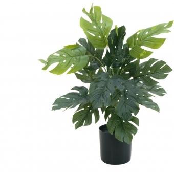 EUROPALMS Split Philo Plant, 38cm