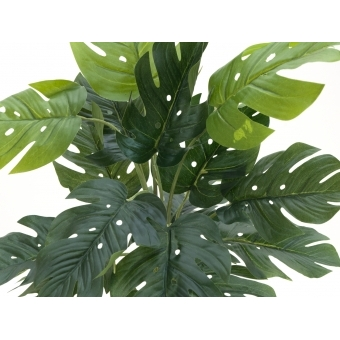 EUROPALMS Split Philo Plant, 38cm #3