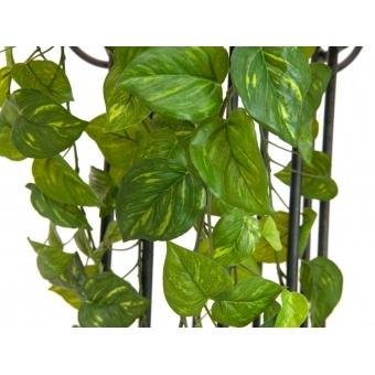 EUROPALMS Pothos Bush Tendril Premium, 100cm #2