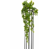 EUROPALMS Pothos Bush Tendril Premium, 70cm