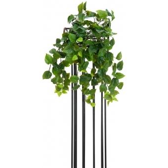 EUROPALMS Philodendron Bush, Premium, 60cm