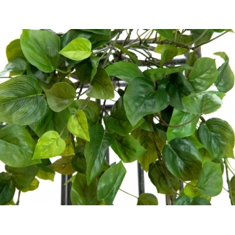 EUROPALMS Philodendron Bush, Premium, 60cm #2
