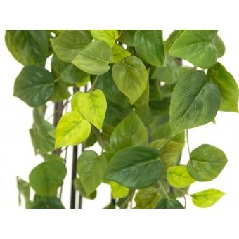 EUROPALMS Philodendron Bush, Premium, 170cm #3