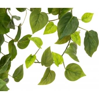 EUROPALMS Philodendron Bush, Premium, 170cm #4