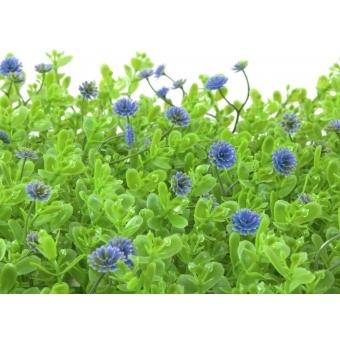 EUROPALMS Grass mat, artificial, green-purple, 25x25cm #3