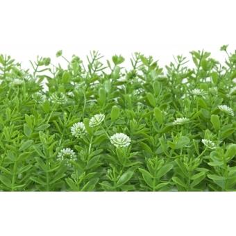 EUROPALMS Grass mat, artificial, green-white, 25x25cm #3