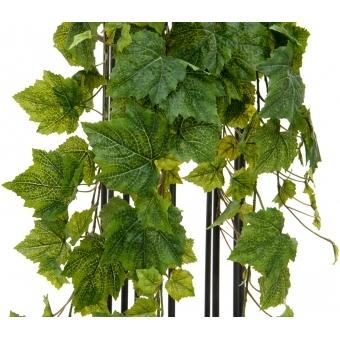 EUROPALMS Grape Bush, Premium, 100cm #2
