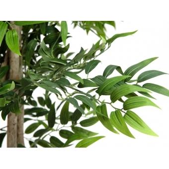 EUROPALMS Ficus longifolia, artificial plant, 165cm #3